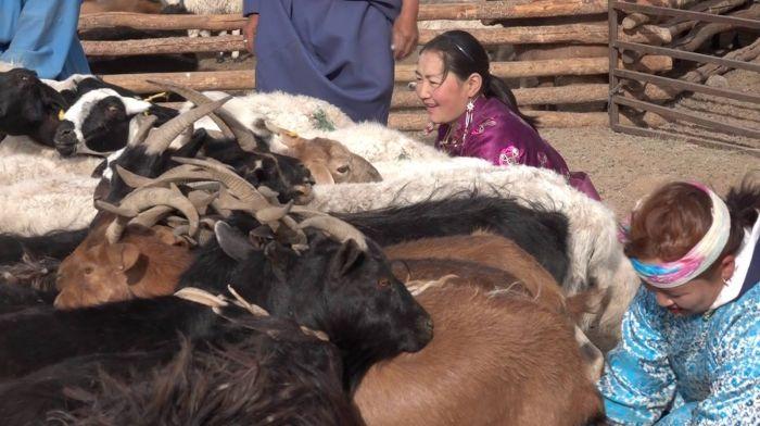 Mongolei Frau mit Tieren